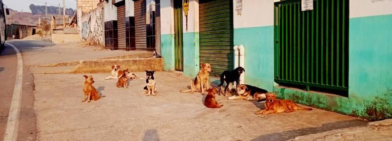 Solidariedade no Pedreira: Comerciante alimenta cães de rua