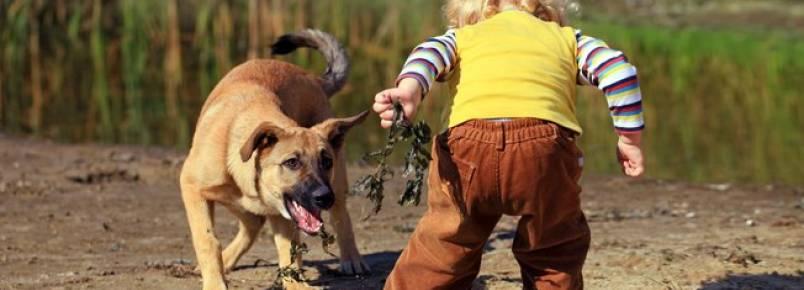 Por que alguns cães têm repulsa a criança?