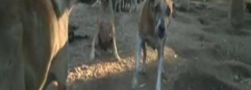 Limoeirense cria mais de 700 cachorros e 1.500 gatos