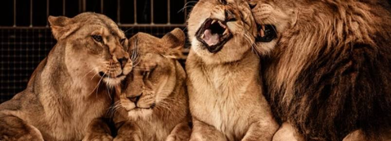 A verdade sobre o uso de animais em espetáculos