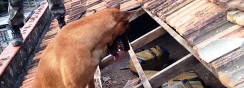 Cão policial encontra 200 quilos de maconha em uma casa no RJj