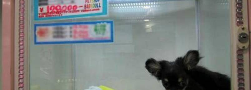 Animais não poderão mais ser expostos em vitrines e gaiolas de Pet Shops no Brasill