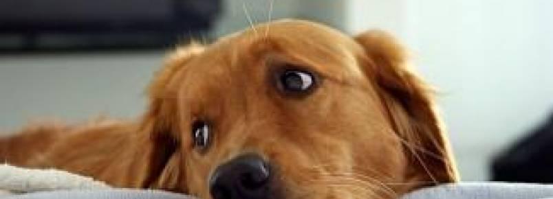 Regras de condomínio não podem proibir morador de ter animal de estimação