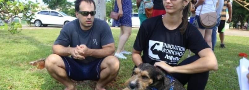 Em feira de adoção, animais de rua conquistam seus novos donos