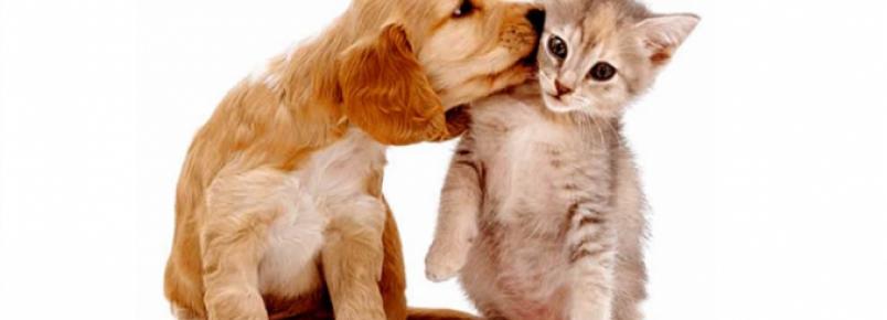 Comissão aprova permissão para animais domésticos em condomínios residenciais