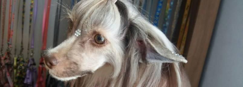 Clinvet recebe cão exótico