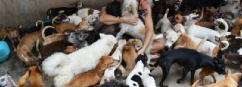 Justiça determina fiança de US$ 265 mil para brasileira presa por maltrato de animais