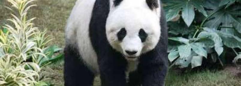 China aprova prisão para quem comer carne de animais raros