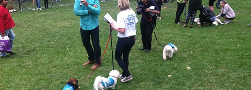 Passear com cães: campanha para adoção