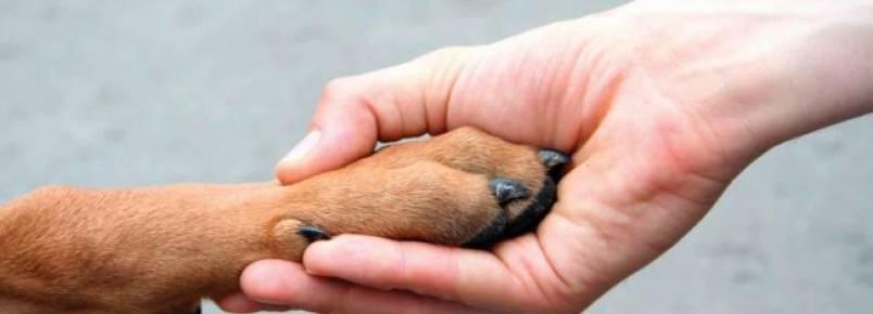 Maltratar animais é crime e pode levar à cadeia
