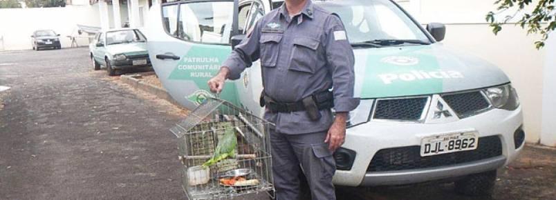 Polícia Ambiental recebe três aves silvestres voluntariamente de pessoas