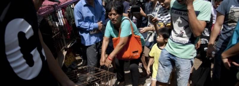 Yang Xiaoyun conseguiu salvar 100 cães do festival de Yulin