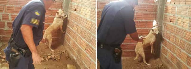Após denúncia anônima, Guarda Municipal liberta cachorro de cativeiro