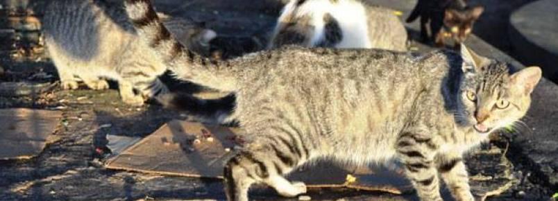 ONG combate maus tratos, abandono e superpopulação de animais em Natal