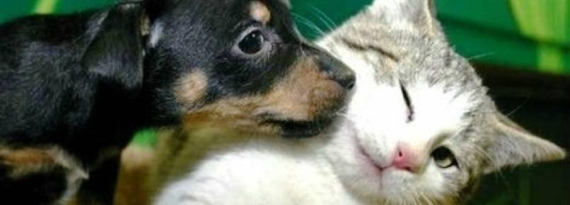 Shopping Recife recebe feira de adoção de animais no próximo domingo