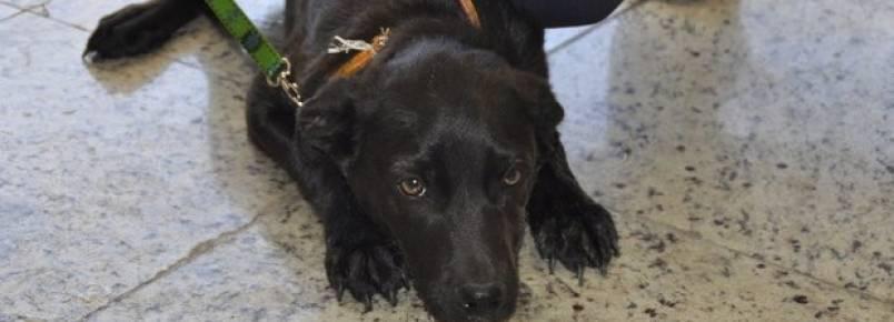 Homem é detido ao abandonar cachorro no Centro de Jundiaí