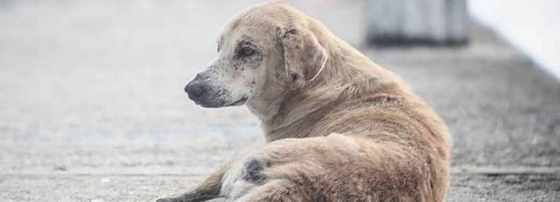 Lei obriga motorista a socorrer animal que atropelar nas ruas de São Paulo