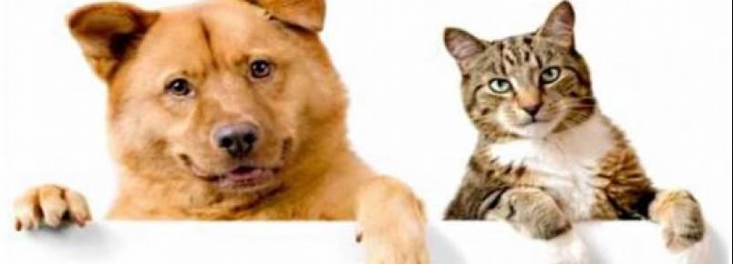 Câmara aprova política de incentivo a quem adotar cães e gatos abandonados