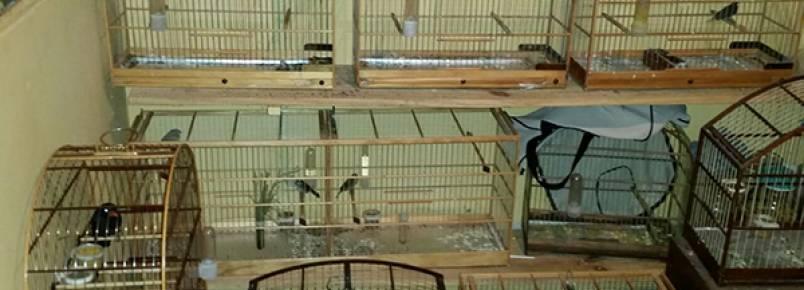 38 aves silvestres são encontradas pela polícia na CIC