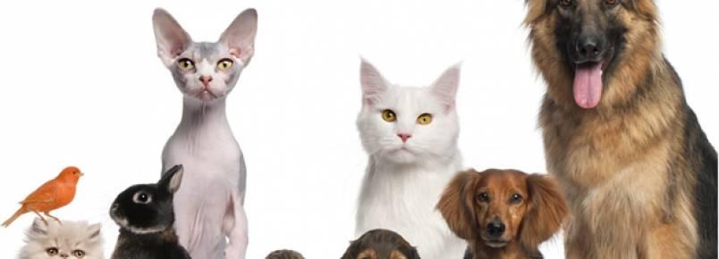 CCJ aprova direito dos animais de serem tratados legalmente como seres vivos