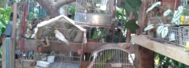 Polícia apreende 20 pássaros criados em cativeiro em Cuiabá