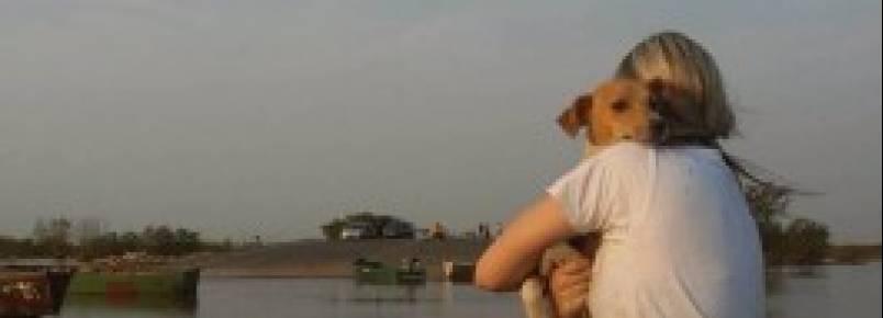 Voluntários resgatam animais no Paquetá