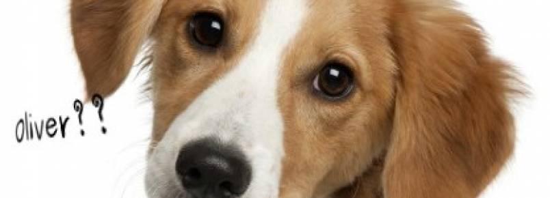 10 dicas para escolher o nome ideal para seu cachorro