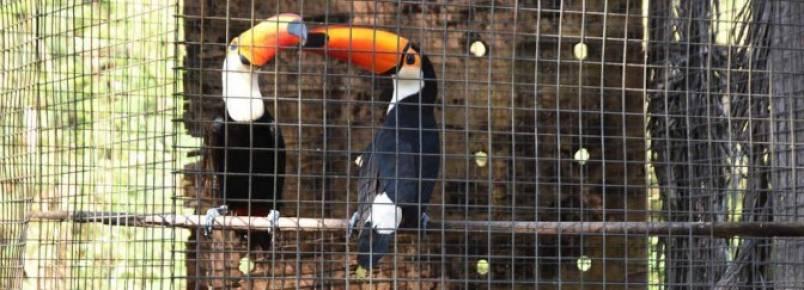 Em um ano, trabalho realizado pelo CRAS possibilita que 600 animais retornem à natureza