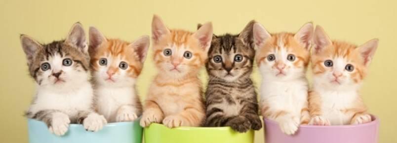 O significado das cores dos gatos
