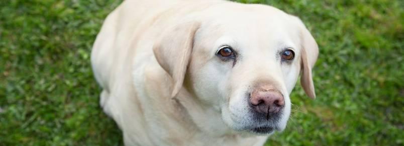 Estudo: cães imitam expressões uns dos outros