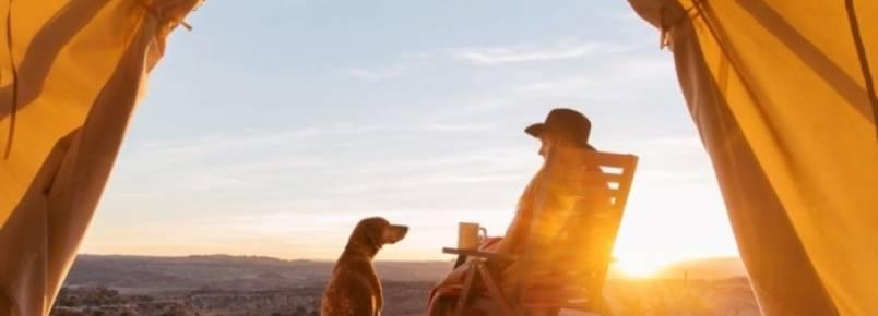 Cão à beira da morte ganha chance de felicidade