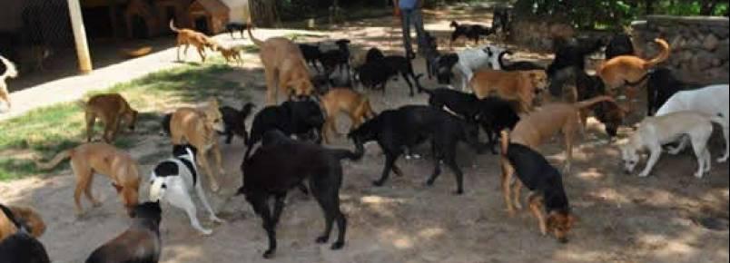 ASPA ITU pede ajuda para alimentar os animais assistidos