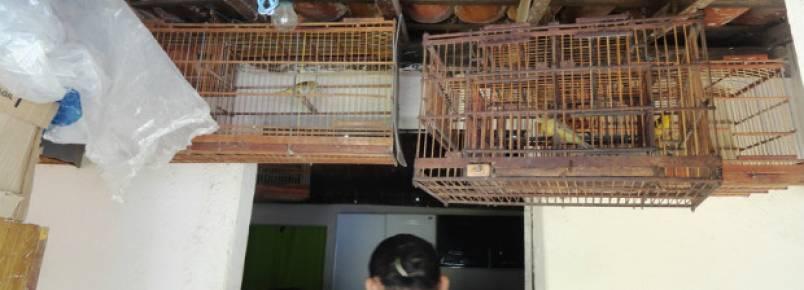 CPRH resgata 62 animais silvestres em cativeiro ilegal