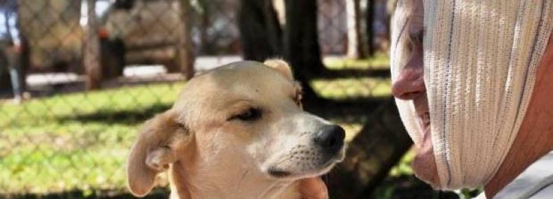 Cão que aguarda por tutor em frente a hospital ganha cama e travesseiro