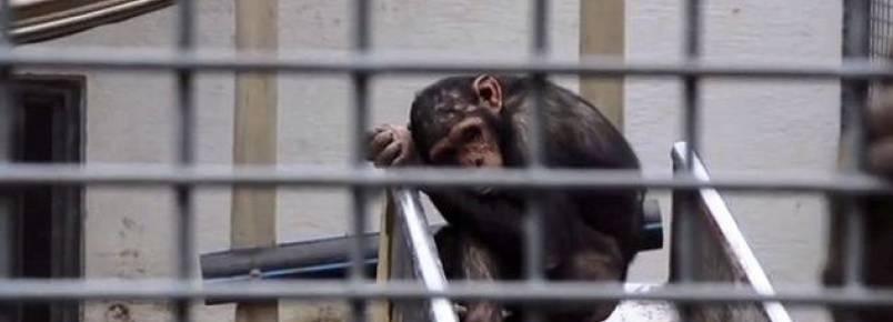 Zoológico que também funciona como circo será investigado por maus-tratos na Alemanha