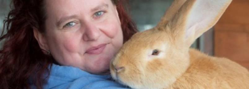 Após ser abandonado, coelho gigante ganha novo lar na Escócia