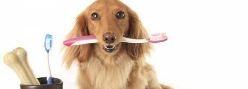Tártaro em cães pode levar a infecções e meningite