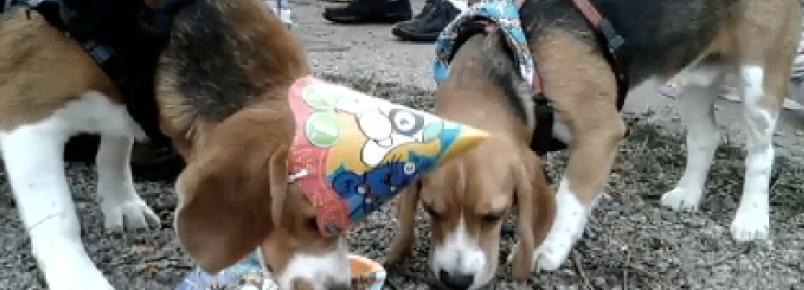 Vida nova: veja como estão os cachorros resgatados do Instituto Royal