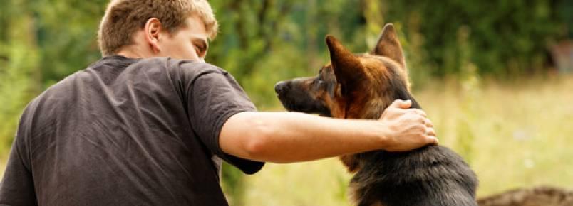 De acordo com os cientistas, os cães sabem enganar
