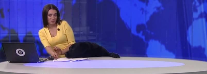 Cão invade estúdio e aparece ao vivo em telejornal na Rússia