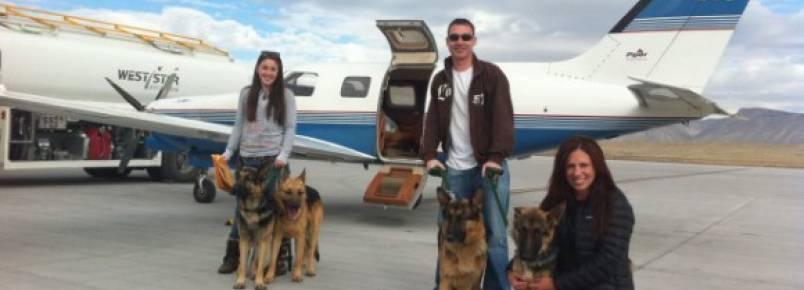 Pilotos se voluntariam para levar animais a feiras de adoção por todo os EUA