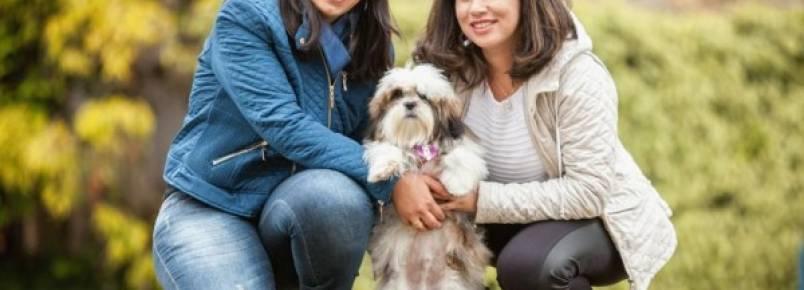 Células-tronco viram aliadas no tratamento de doenças em pets