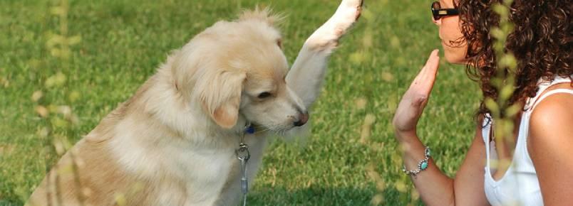 Companhia de animais contribui para aliviar o stresse