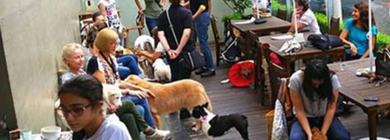 20 lugares em São Paulo para ir com seu animal de estimação