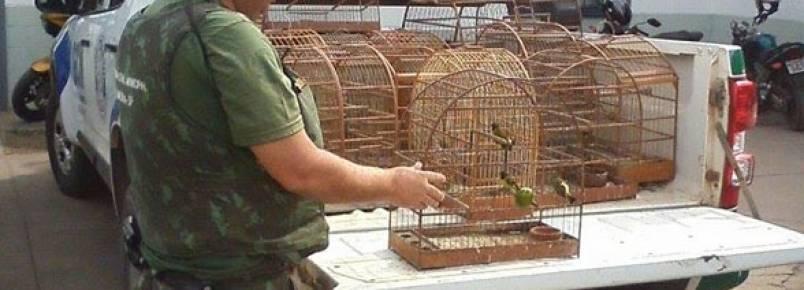 Criador faz entrega de 19 pássaros