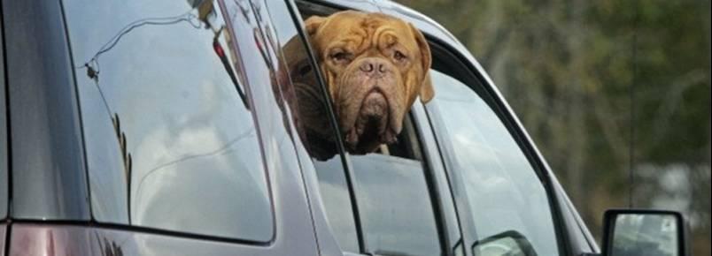Estudo revela que há pouca segurança no transporte de cães e gatos