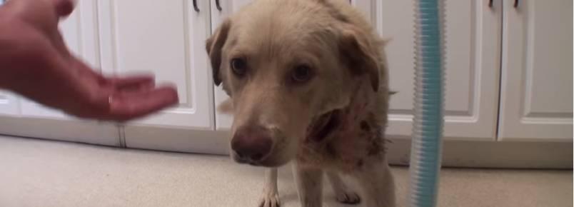 Cachorro é resgatado uma hora antes de sofrer eutanásia