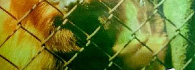 Polícia Florestal ocupará área de Caxias para acabar com tráfico de animais