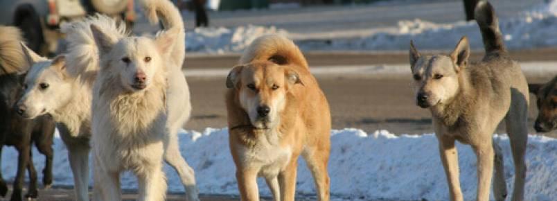 Na Espanha, os protetores dos animais recolhem um animal a cada cinco minutos