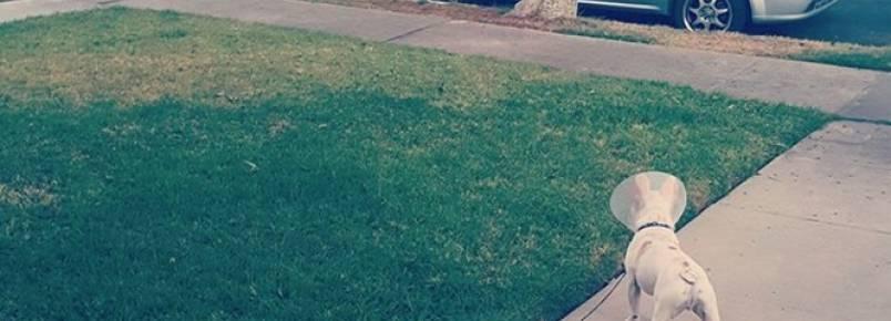 Cena divertida de cão encontrando amor de sua vida em abajur faz sucesso na web